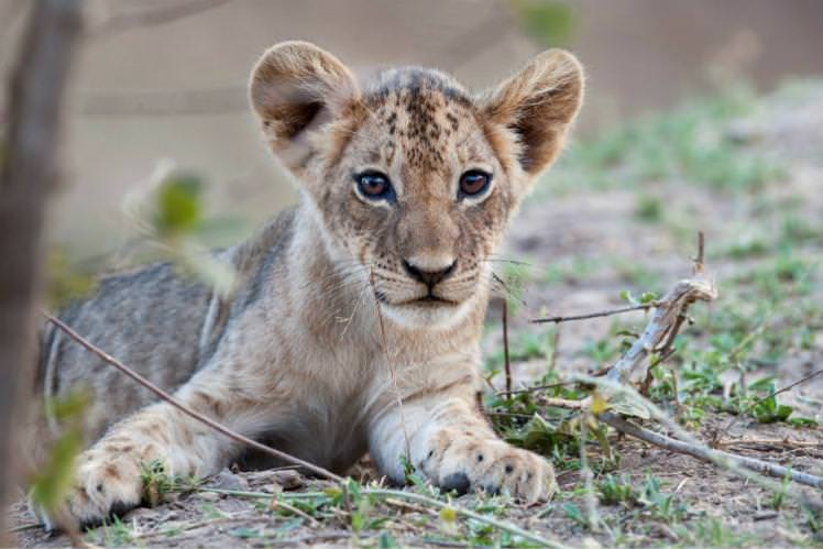 If you're a sucker for baby animals, November's the time to visit Luangwa National Park, Zambia. Image by Nick Garbutt / Science Faction / Getty