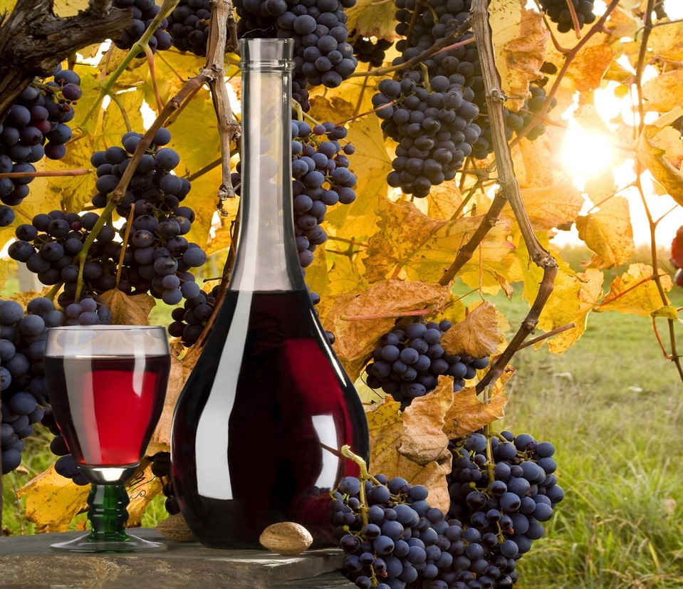 Wine glass, jug, & grapes. ASIT's Athens full & half day tours packages include wine tasting.